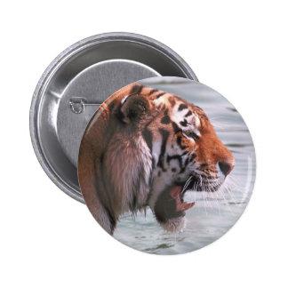 Tiger Roar Buttons