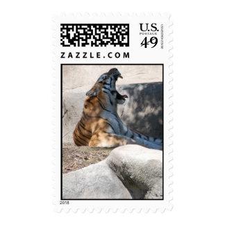 Tiger Roar Stamps
