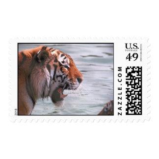 Tiger Roar Postage Stamp