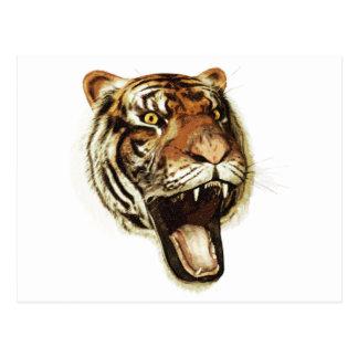 Tiger Roar Postcard