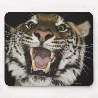 Tiger roaring 2 mouse pad