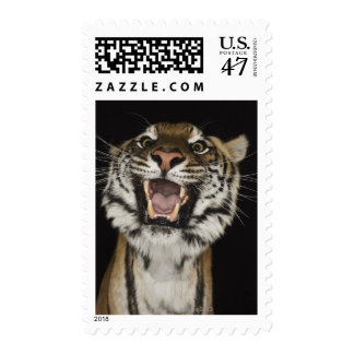Tiger roaring 2 postage