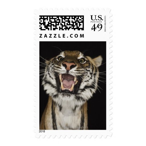 Tiger roaring 2 postage stamps
