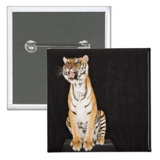 Tiger roaring pins