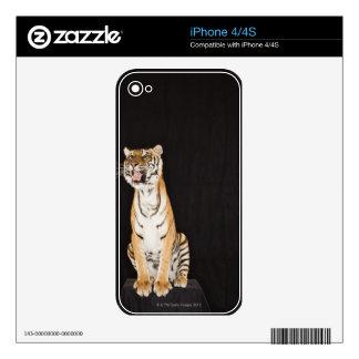 Tiger roaring iPhone 4S skin