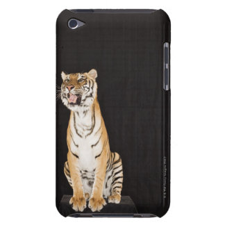 Tiger roaring iPod touch case