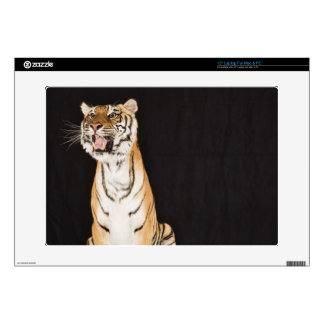 Tiger roaring laptop decal