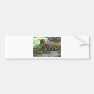 Tiger, Royal Bengal tiger Bumper Sticker