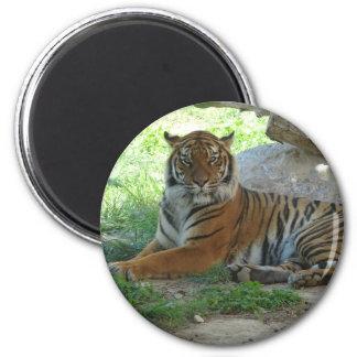 Tiger, Royal Bengal tiger Magnet