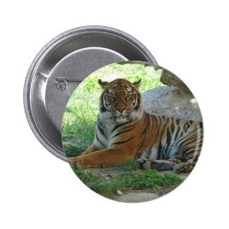 Tiger, Royal Bengal tiger Pinback Button