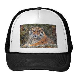 Tiger Royal in Snow Ball Cap Mesh Hat