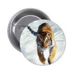 Tiger running in snow pins