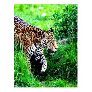 Tiger rush to love and joy postcard