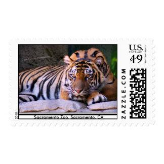 Tiger, Sacramento Zoo Stamps