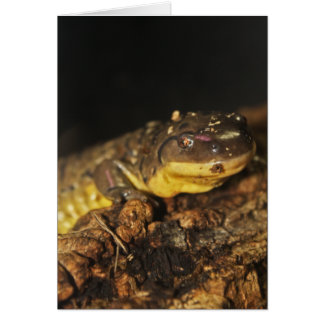Tiger Salamander Card