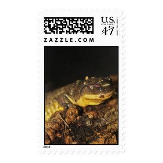 Tiger Salamander Postage