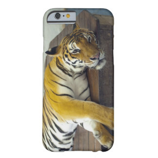 Tiger, Samui, Thailand Barely There iPhone 6 Case
