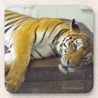 Tiger, Samui, Thailand Beverage Coaster