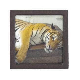 Tiger, Samui, Thailand Keepsake Box