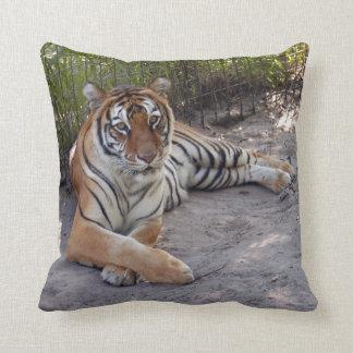 tiger-sermonti-003 cojin
