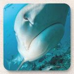 Tiger shark (Galeocerdo cuvier) Shark feed Beverage Coaster