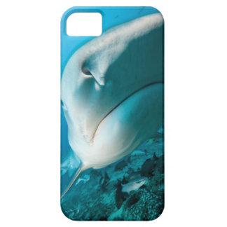 Tiger shark (Galeocerdo cuvier) Shark feed iPhone 5 Cases