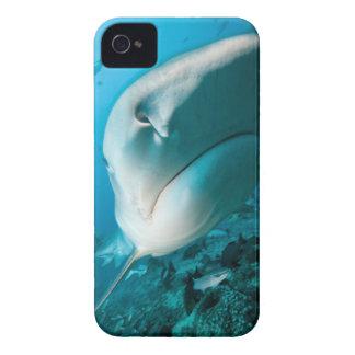 Tiger shark (Galeocerdo cuvier) Shark feed iPhone 4 Case-Mate Case