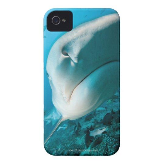 Tiger shark (Galeocerdo cuvier) Shark feed iPhone 4 Cover