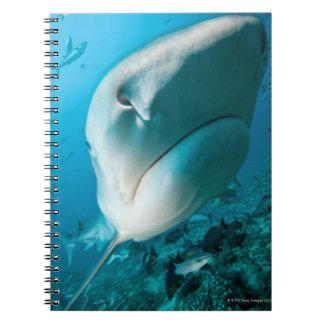 Tiger shark (Galeocerdo cuvier) Shark feed Notebook
