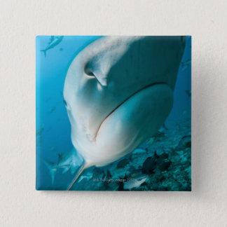 Tiger shark (Galeocerdo cuvier) Shark feed Pinback Button