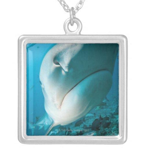 Tiger shark (Galeocerdo cuvier) Shark feed Square Pendant Necklace