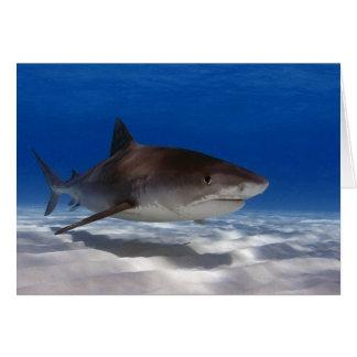 Tiger Shark Greeting Card