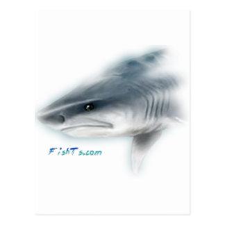 Tiger Shark Head Postcard