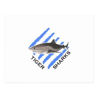 TIGER SHARKS POSTCARD