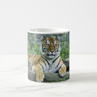 Tiger, Siberian Coffee Mug