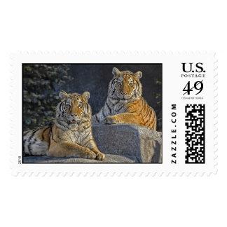 Tiger Sisters Postage
