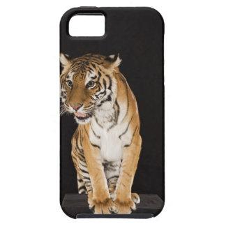 Tiger sitting on platform 2 iPhone SE/5/5s case