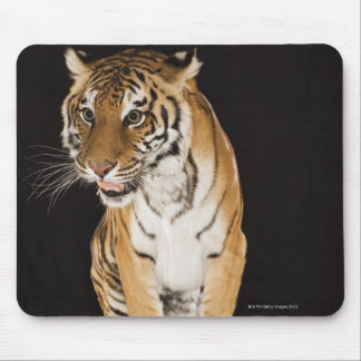 Tiger sitting on platform 2 mouse pad