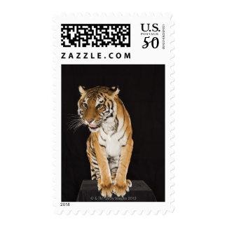Tiger sitting on platform 2 postage