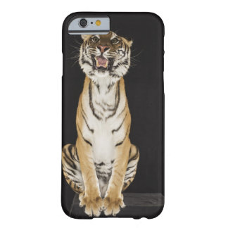 Tiger sitting on platform barely there iPhone 6 case