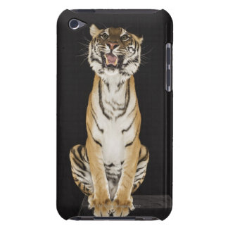 Tiger sitting on platform Case-Mate iPod touch case