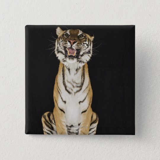 Tiger sitting on platform pinback button
