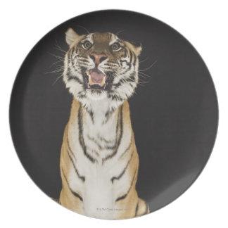 Tiger sitting on platform plate