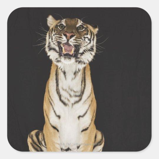 Tiger sitting on platform square sticker