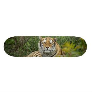 Tiger Skateboard Deck
