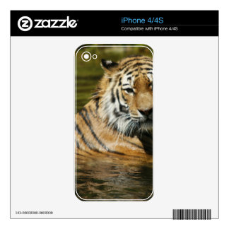 Tiger Skin For The iPhone 4