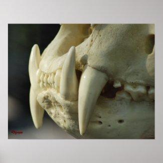 Tiger Skull print