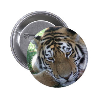 Tiger-sleeping-in-the-grass WILD ANIMALS BIG CATS Button
