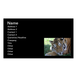 Tiger-sleeping-in-the-grass WILD ANIMALS BIG CATS Double-Sided Standard Business Cards (Pack Of 100)