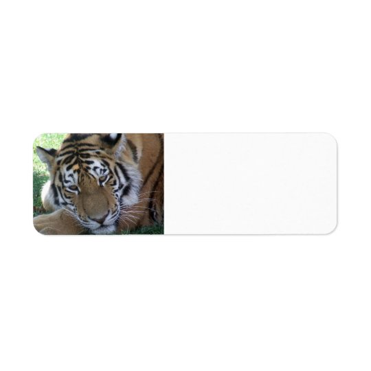 Tiger-sleeping-in-the-grass WILD ANIMALS BIG CATS Label